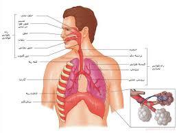 پاورپوینت سیستم تنفس سیستم تنفس تحقیق سیستم تنفس مقاله سیستم تنفس بخش بیرونی بینی  بخش درونی یا حفره بینی جدار داخلی جدار خارجی جدار بالائی یا سقف جدار پائینی یا کف بینی وظایف بینی