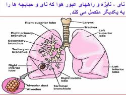 دانلود پاورپوینت تنفس هنگام ورزش پاورپوینت تنفس هنگام ورزش تنفس هنگام ورزش تنفس عمل ریه ساختمان دستگاه تنفسی بخشهای هدایتی و تنفسی دستگاه ریوی مکانیک تنفس تهویه ریوی تهویه حبابچه ای حجم ها و ظرفیتهای ریوی مفاهیم حجمهای ریوی مدار گردش خون ریوی میزان جریان خون به ریه ها رابطه تهویه و پر فوزیون انتقال اکسیژن در عضله