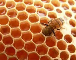 زنبور عسل موریانه عسل لانه الگوریتم توده ای کلونی